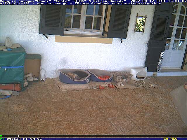 The first CatCam from Greece